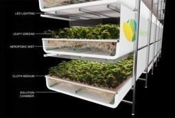 "Vertical Farm Takes Food Production to New Heights (""you can take advantage of so many elements"") 