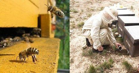 Abejas amenazadas: de cuando el zorro (Monsanto) compró el ... - Panamá On | Autosostenibilidad en el mundo | Scoop.it