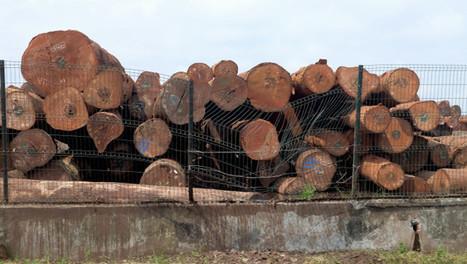 Bois illégal : des premiers contrôles, mais peu d'impact | Biodiversité | Scoop.it