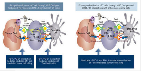 Pd 1 Pathway Blockade May Shape The Future Of H