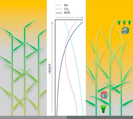 Five Ways Scientists Want to Hack Plants to Improve Photosynthesis | Agricultural Research | Scoop.it