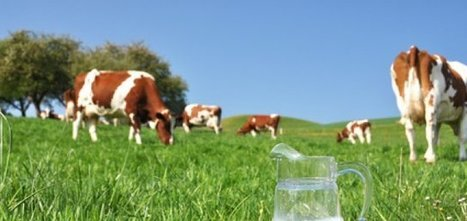 Conso : Remplacer le lait de vache | Des 4 coins du monde | Scoop.it