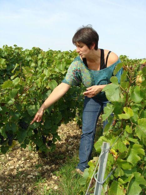 Viticulture biodynamique : une médecine douce pour la terre | Le flux d'Infogreen.lu | Scoop.it