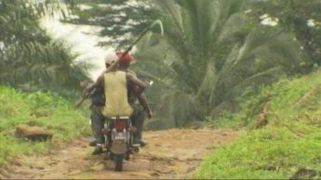 Cameroun : la course à l'huile de palme | Questions de développement ... | Scoop.it