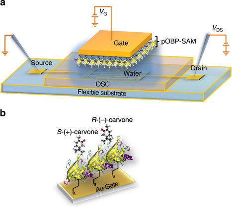 Capacitance-modulated transistor detects odorant binding protein chiral interactions. | Odorant Binding Proteins | Scoop.it