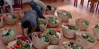 Agriculture bio : les opérateurs livrent entre 30 et 100 paniers de légumes par semaine   Bio & Terroir du Maroc   Scoop.it
