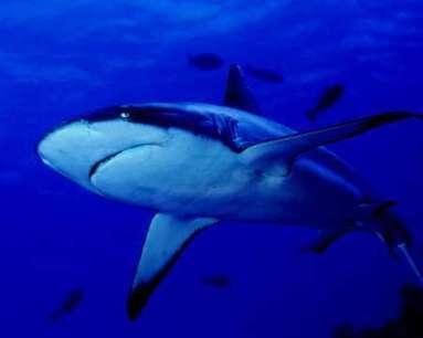 Plaidoyer pour la sauvegarde des requins | La préservation de l'environnement marin | Scoop.it