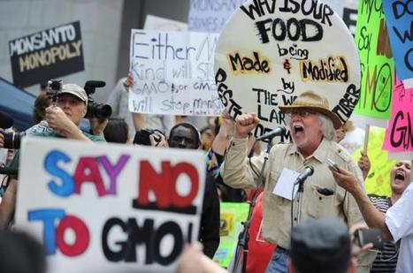 GMOs and politico-corporate incest   GMO GM Articles Research Links   Scoop.it