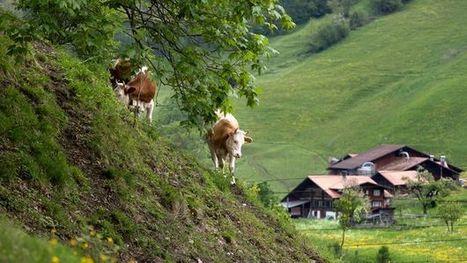 Suisse : Les jeunes paysans peinent à trouver une exploitation à reprendre | Questions de développement ... | Scoop.it