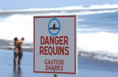 Our exaggerated fear of shark attacks - gulfnews.com | Shark Week | Scoop.it