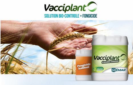 Biocontrôle en grandes cultures : l'intérêt grandit, selon Goëmar | Agriculture durable et protection des cultures | Scoop.it