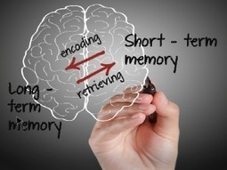 How does memory work? | The Edynco blog | 21st Century Concepts- Educational Neuroscience | Scoop.it