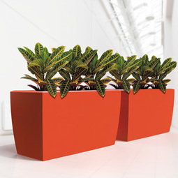 Why you should hire indoor plants company in Melbourne for company or home? | Foliage Indoor Plant Hire | Scoop.it
