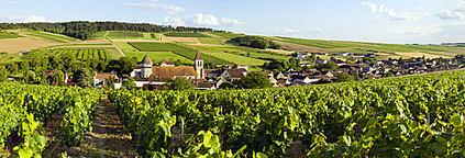Le vignoble de l'Auxerrois labellisé ! | Web, E-tourisme & Co | Scoop.it