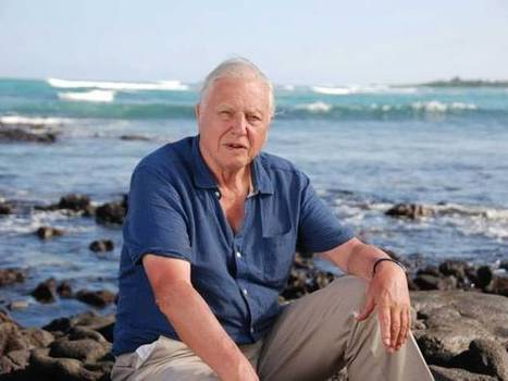 David Attenborough: Leaders are in denial about climate change | Climate Chaos News | Scoop.it