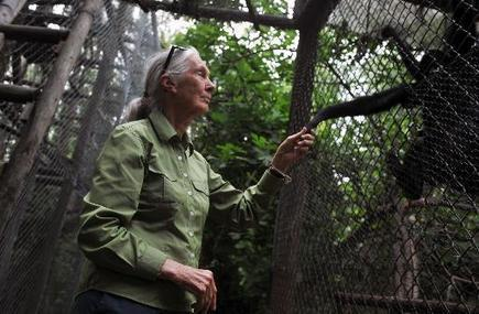 China pillages Africa like old colonialists says Jane Goodall | Sustain Our Earth | Scoop.it