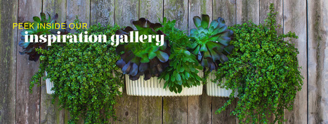 Woolly Pocket | Living Walls, Vertical Gardens, Indoor Wall Garden Planters for Urban Gardening | Wellington Aquaponics | Scoop.it