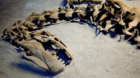 Dinosaures, nés grâce aux volcans, morts à cause d'un astéroïde | Aux origines | Scoop.it