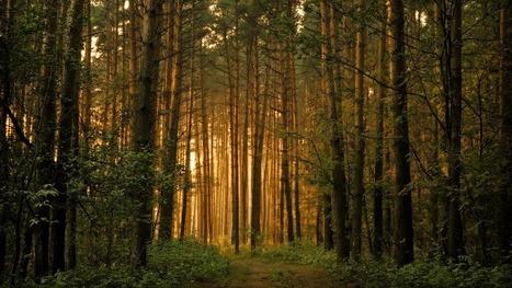 Les arbres partagent en sous-sol leurs ressources alimentaires - GuruMeditation | Les colocs du jardin | Scoop.it