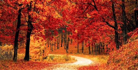 Prevención de incendios forestales - Actualidad Medio Ambiente | Actualidad forestal cerca de ti | Scoop.it