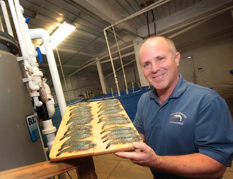 Automation Fine-Tunes Aquaculture Production Efficiency and Increases Profits | Aquaculture | Scoop.it
