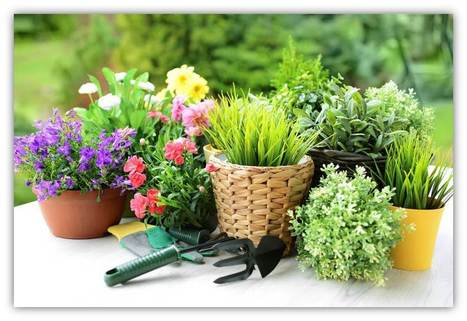 23 Spring Gardening Tips and Tricks from the Experts | Cooking Ideas | Scoop.it