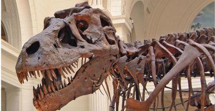Les dinosaures ont été victimes de deux réchauffements climatiques | Aux origines | Scoop.it