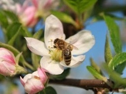 Gene's Green Scene: Trees for Bees | Fort Lauderdale Forester (Blog) | CALS in the News | Scoop.it