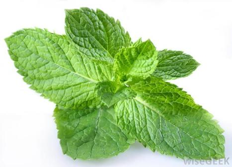 What Are the Health Benefits of Peppermint Oil? (with picture) | Prevention and Health | Scoop.it