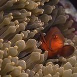 How to Plan your Great Barrier Reef Vacation | eHow | Great Barrier Reef Diving | Scoop.it