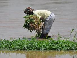 Kinshasa: des maraichères autorisées à exercer librement leurs activités à Kingabwa | Agriculture en RDC - République Démocratique du Congo | Scoop.it