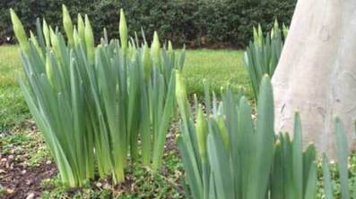 St Davids Day tasks for gardeners: What jobs should I do in my garden in March? | The DIY Doctor's Blog | Home Improvement and DIY | Scoop.it