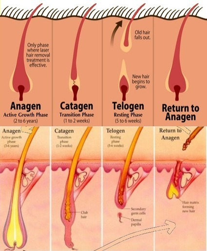 Regrow Hair - Understanding The Why and The How | hair loss solutions | Scoop.it