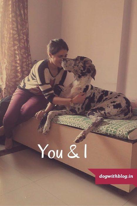 7 Ways to Celebrate World Dog Day | dog with blog | Scoop.it