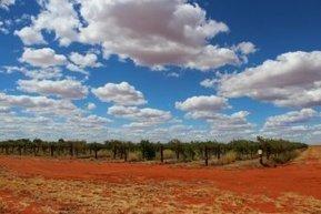 Centrefarm buys Territory grape farm | this curious life | Scoop.it