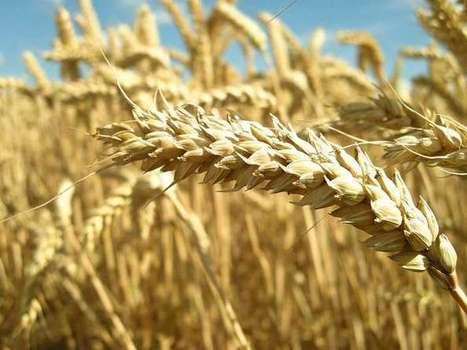 Romanian port of Constanta becomes Europe's grain hub   IRIS Geopolitics of Grain   Scoop.it