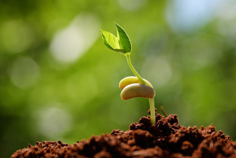 Q&A: Do Seeds Have Expiration Dates?   Green Living   Scoop.it