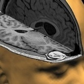 Top 10 Ways Your Brain Is Sabotaging You (and How to Beat It) | The brain and illusions | Scoop.it