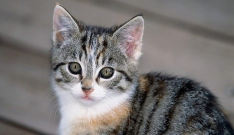 Kitten Thrown From Car At Animal Rights Activists | Nature Animals humankind | Scoop.it