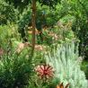 Long Beach Landscaping