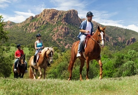 A Beginner's Guide to Horseback Riding | Animals | Scoop.it