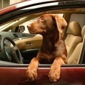 TOP 10 Weirdest Things Found In Rental Cars!   RentalCars24H - We LOVE traveling by car!   Scoop.it