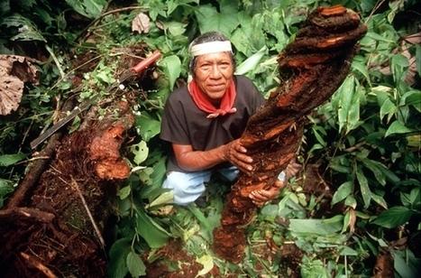 Biopiracy ban stirs red-tape fears   Biodiversité et économie   Scoop.it