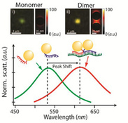 Gold Nanoparticles used for breast cancer diagnosis by detecting BRCA1 mRNA splice variants | Nanotechnology & Imaging | Scoop.it
