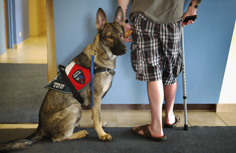 Dogs help stressed US military veterans cope with civilian life - NBCNews.com (blog)   Military   Scoop.it