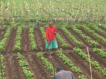 Agriculture paysanne : Obstacle foncier | Daraja.net | Scoop.it