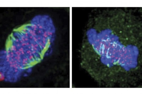 Researchers Identify Potential New Targets For Cancer Treatments | Science Lovers | Scoop.it