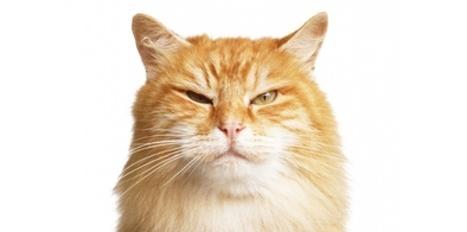 Comment faire maigrir un chat (sans le rendre fou) ? | CaniCatNews-santé | Scoop.it