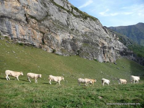 Le retour des blondes - Montagne Pyrénées | Vallée d'Aure - Pyrénées | Scoop.it