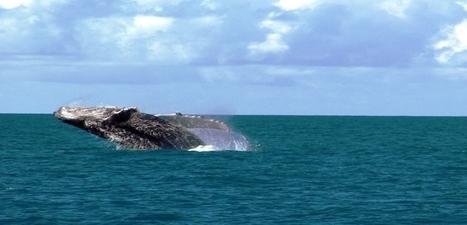 Projet de parc marin du Cap #Corse et de l'Agriate : avis du CNPN | Odyssea : Escales patrimoine phare de la Méditerranée | Scoop.it